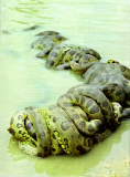 Sexo-cobras-2