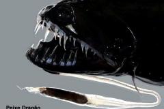 1_peixe-dragão