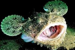anglerfish02