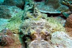 peixe-crocodilo2