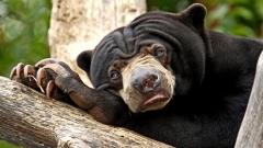 Urso-Preguiça-15