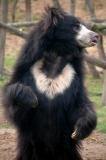 Urso-Preguiça-20