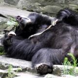 Urso-Preguiça-22