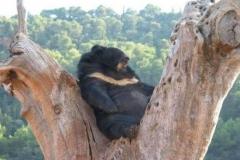 Urso-Preguiça-4