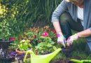 Dicionário da Jardinagem