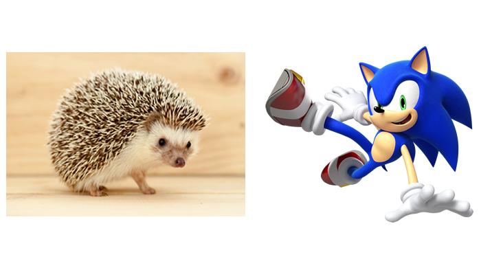 Hedgehog ou Sonic