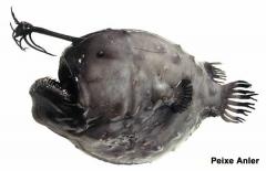 greenland-fish-female-anglerfish_