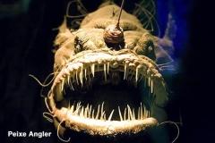 peixe-angler