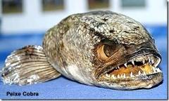 peixe-cobra-2_