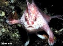 peixe-mão