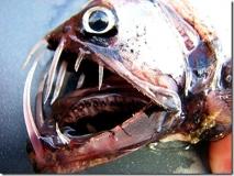 peixe-vibora2