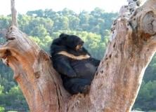 Urso-Preguiça-13