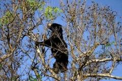 Urso-Preguiça-18