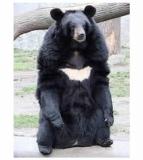 Urso-Preguiça-23
