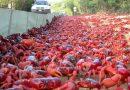 A ilha dos Caranguejos Vermelhos